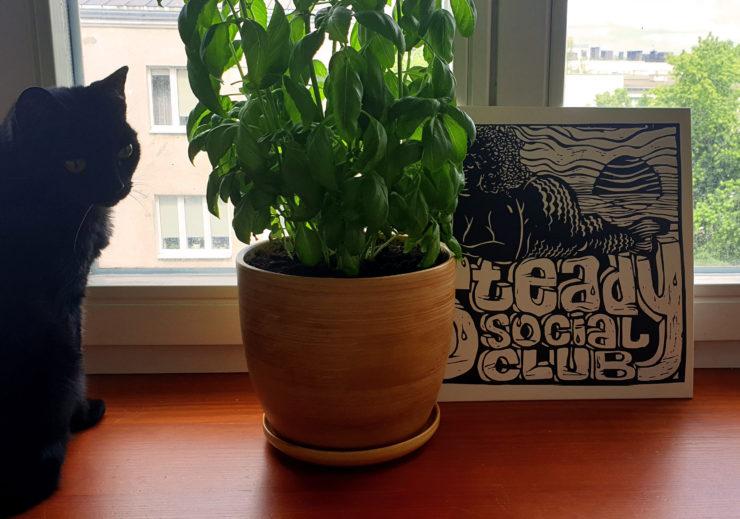 Steady Social Club - zdjęcie winyla